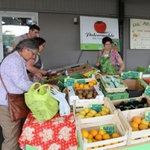 stand-legume